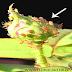 Rose Pest Control - Chemical Usage