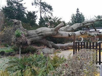 Przerwrócone drzewo