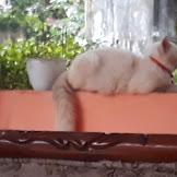 Manfaat memelihara kucing rumahan