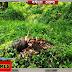 मधेपुरा: एस एच 91 सड़क के किनारे के पेड़ों की धड़ल्ले से जारी है कटाई