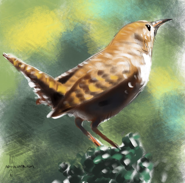 House Wren bird painting by Artmagenta