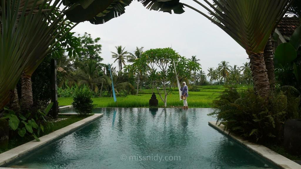 hotel ada infinity pool dan view sawah di bali
