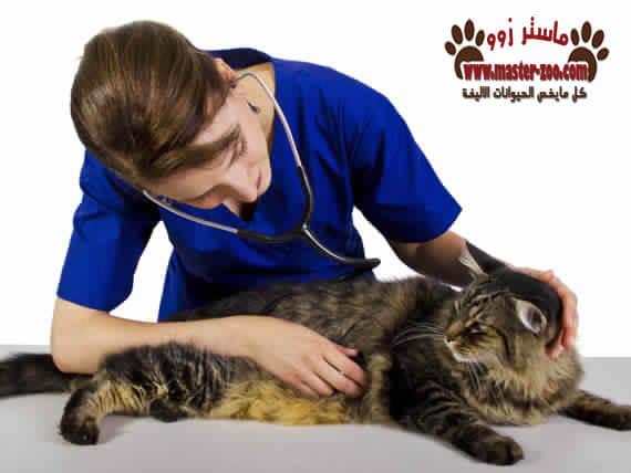 أهم الحالات المرضية المنتشرة بالقطط بالصور