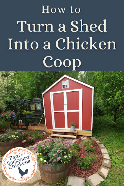 Here's how to turn a shed into a chicken coop so you can easily provide your birds with a safe place to live.