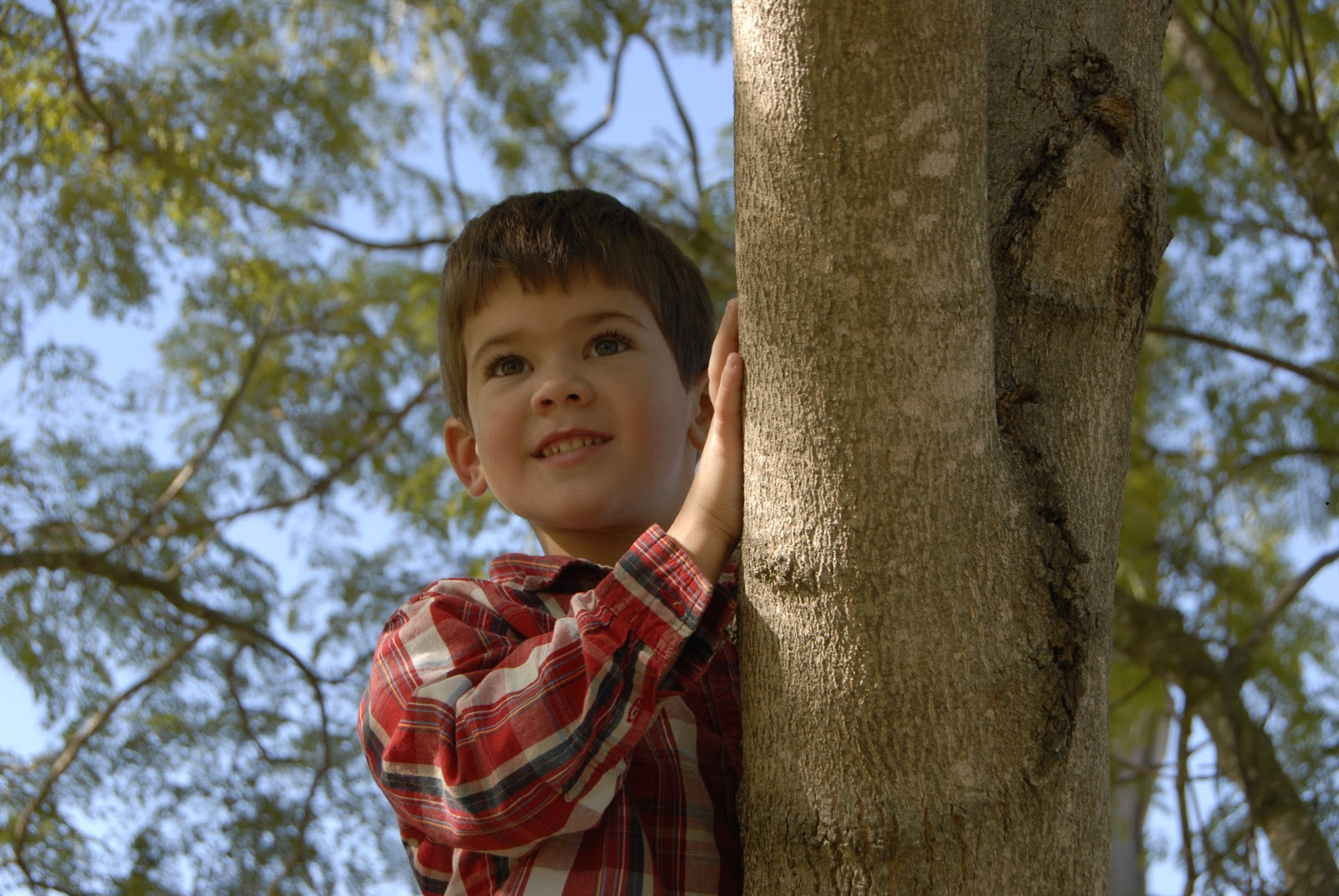 Grandson Climbing A Tree: LadyD Books