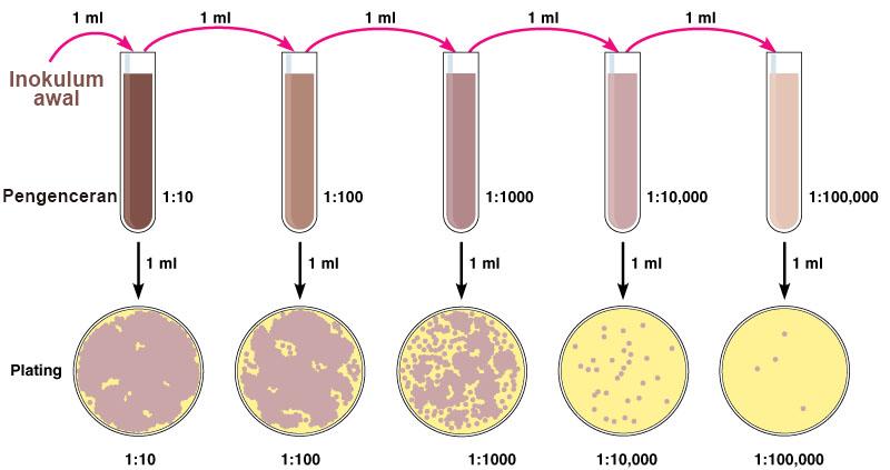 Materi dan Panduan Enumerasi Mikroba, Dilengkapi Gambar ...