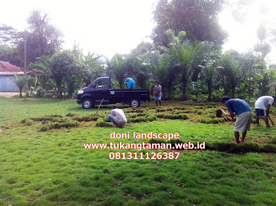 Rumput gajah mini , gajah mini Bergaransi