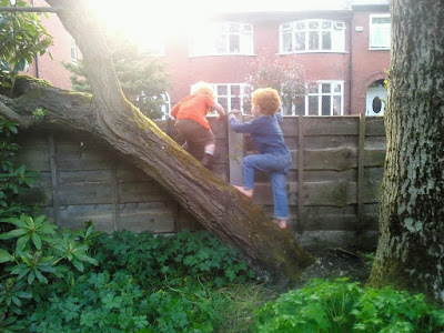 two small boys climbing over a fallen tree to attempt escape from their garden