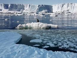 Pemanasan Global, Es Dunia Meleleh dengan Cepat dan Membahayakan Kehidupan