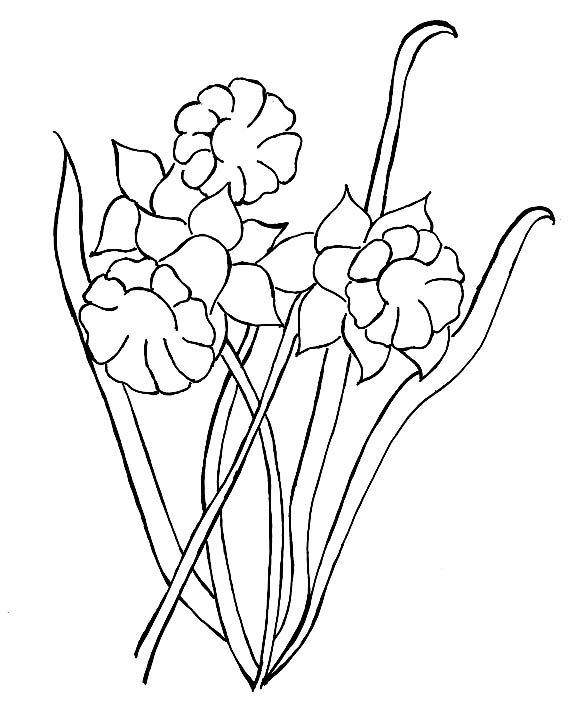 Daffodil coloring pages, i love u mom coloring pages