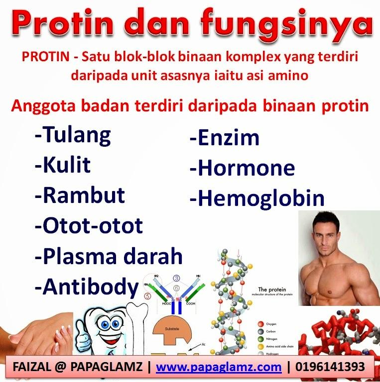 fungsi_protein