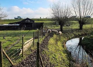 Foto cover Waterbewustzijn van de Nederlandse bevolking