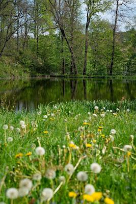 Kammweg Erzgebirge  Etappe 3+4 von Sayda nach Olbernhau  Wandern in Sachsen 07