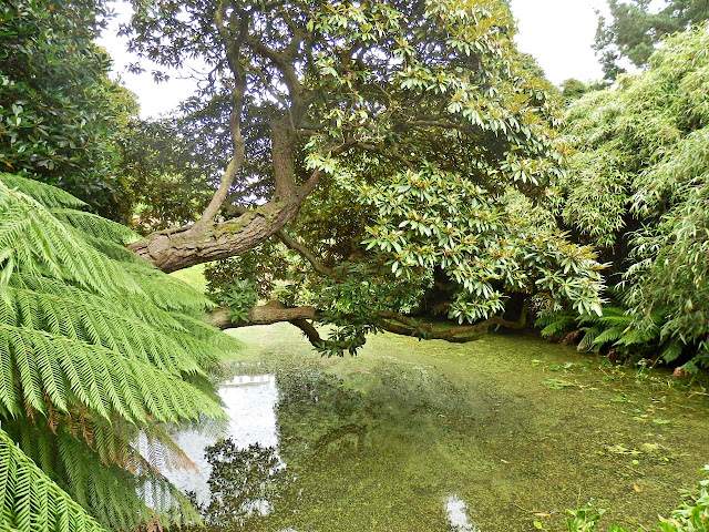 Pond and ferns at Lost Gardens of Heligan