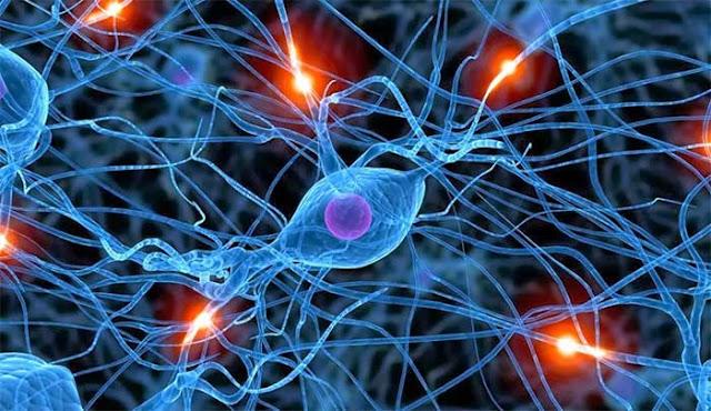 Phát hiện mới cho thấy não người có thể tạo không gian 11 chiều