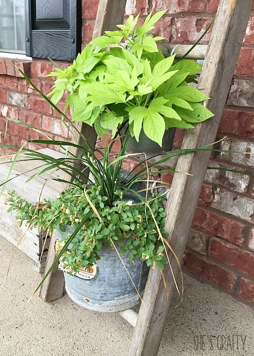 Farmhouse porch decor and plants