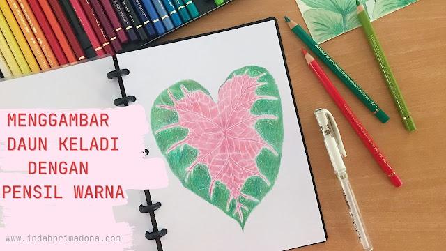daun keladi, tanaman hias, menggambar daun keladi, menggambar tanaman hias, menggambar dengan pensil warna, color pencil, pensil warna, pemula