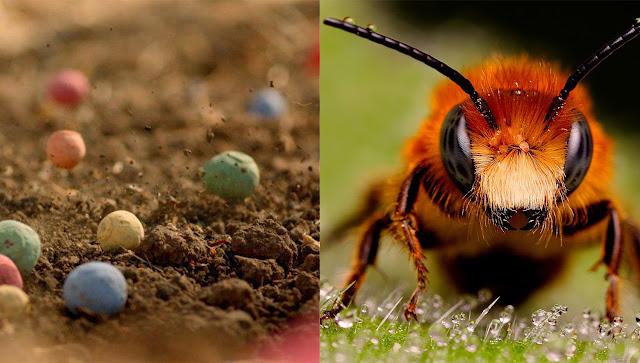 bombardeo-semillas-colores-salvar-abejas