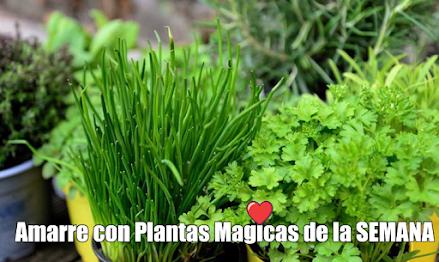 Amarre con Plantas Aromaticas