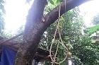 Seorang Warga Timpuk Ditemukan Tewas Tergantung di Pohon Jambu