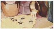 Dongeng Lalat dan Madu (Aesop) | DONGENG ANAK DUNIA