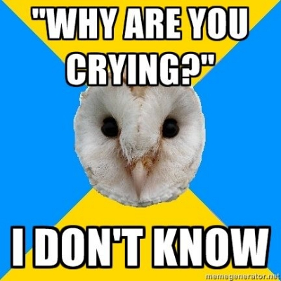 bipolar owl crying for no reason