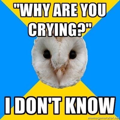 bipolar owl crying for no reason