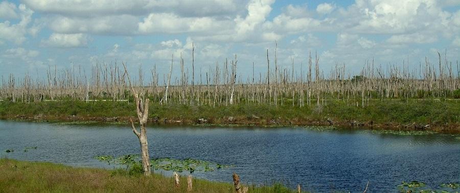 Canal L31 y árboles Melaleuca