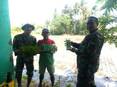 http://www.topfm951.net/2019/07/demplot-padi-koramil-08-bumiayu-brebes.html#more