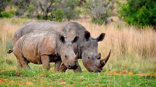 One Horned Rhino - Kaziranga National Park