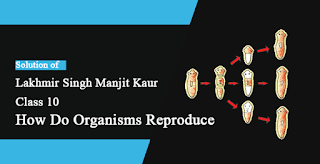 Solutions of How do Organisms Reproduce? Lakhmir Singh Manjit Kaur SAQ,  LAQ, MCQ and HOTS Pg No. 169 Class 10 Biology
