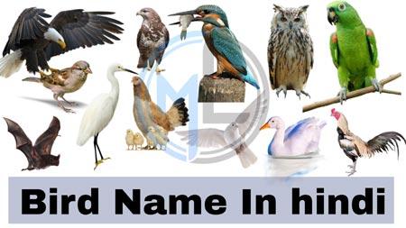 Bird name in hindi