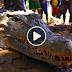 WATCH: Isang Philippine Crocodile o 'Bukarot' ang nahuli sa San Mariano, Isabela