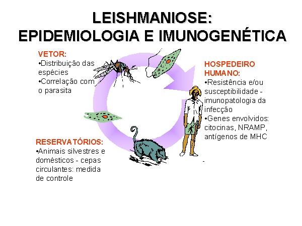 #Leishmaniose - Transmissão, Sintomas e Prevenção
