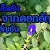 หุงข้าวด้วยน้ำดอกอัญชัน สมุนไพรริมรั้วบ้านช่วยการไหลเวียนของเลือด แก้เหน็บชา บำรุงสายตา ละลายลิ่มเลือด