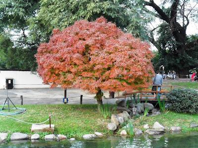 Buenos Aires; viajando pela America Latina; Jardim Japones; Palermo