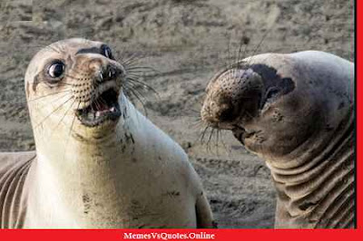 Funny Animals Photos