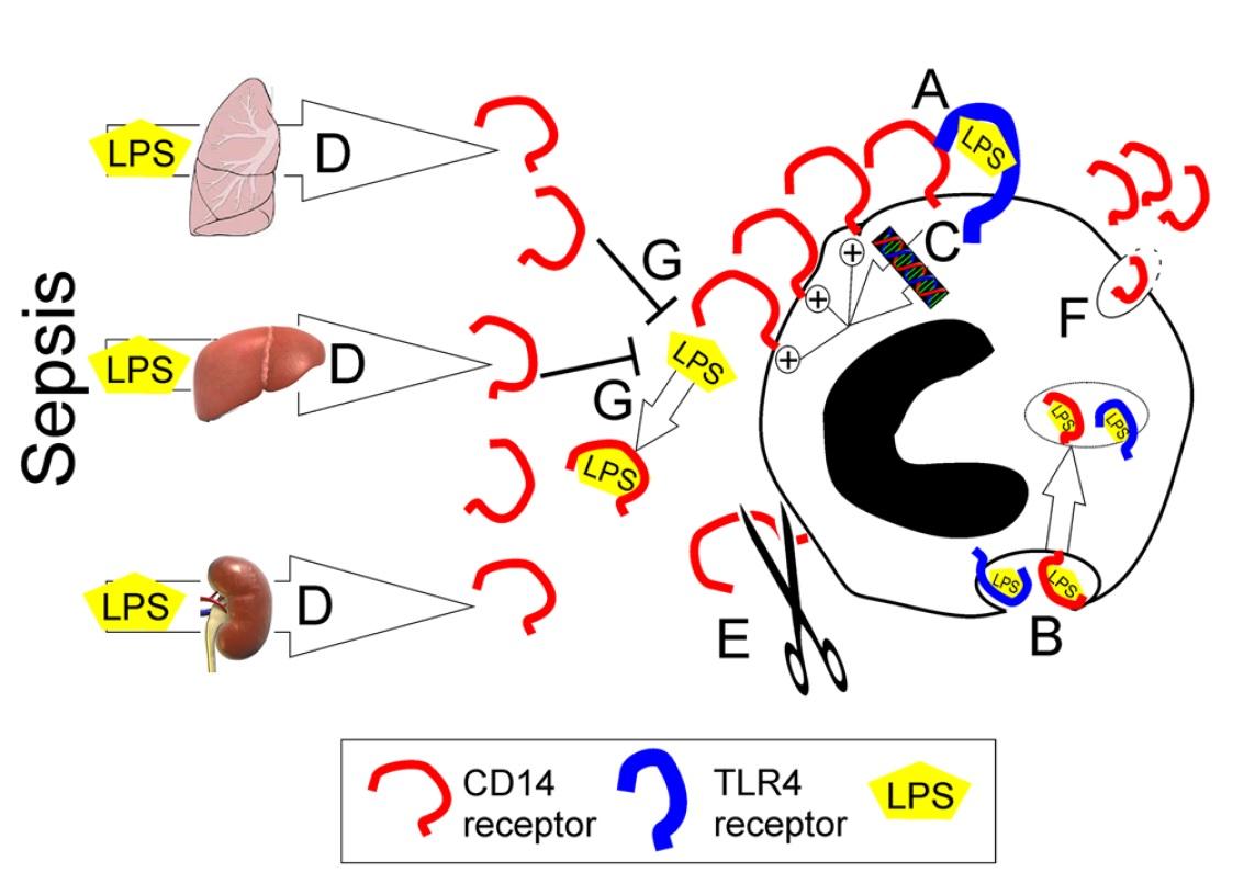 急性期医療を学ぶ: プレセプシン