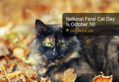 National Feral Cat Day Wishes
