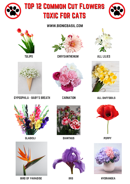 Top 12 Common Cut Flowers Toxic For Cats & To Avoid ©BionicBasil®