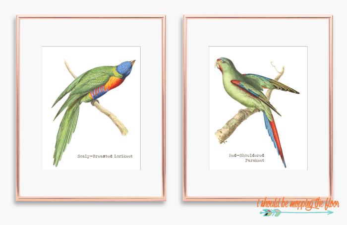Parakeet Printable