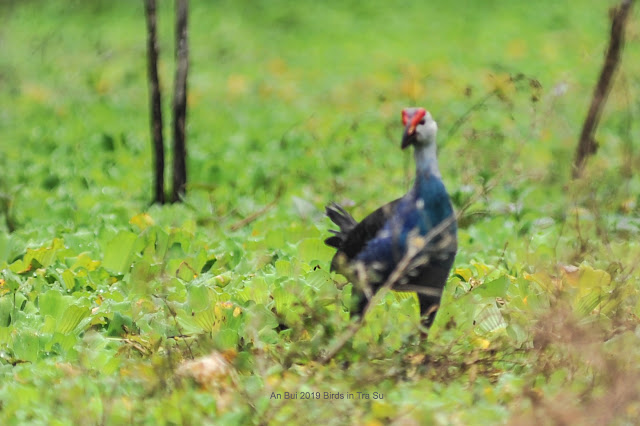 Mùa chim sinh sản tại rừng Tràm Trà Sư