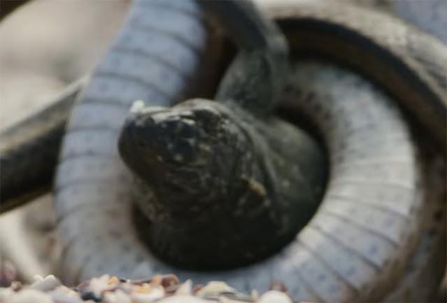 Detrás de cámaras del video de la Iguana de la BBC