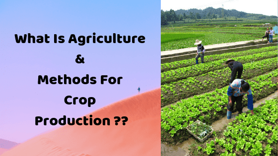 What Is Agriculture ?