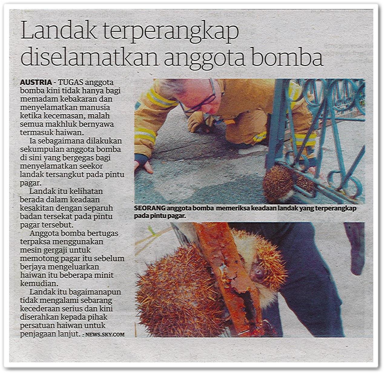 Landak terperangkap diselamatkan anggota bomba - Keratan akhbar Utusan Malaysia 25 Mei 2019