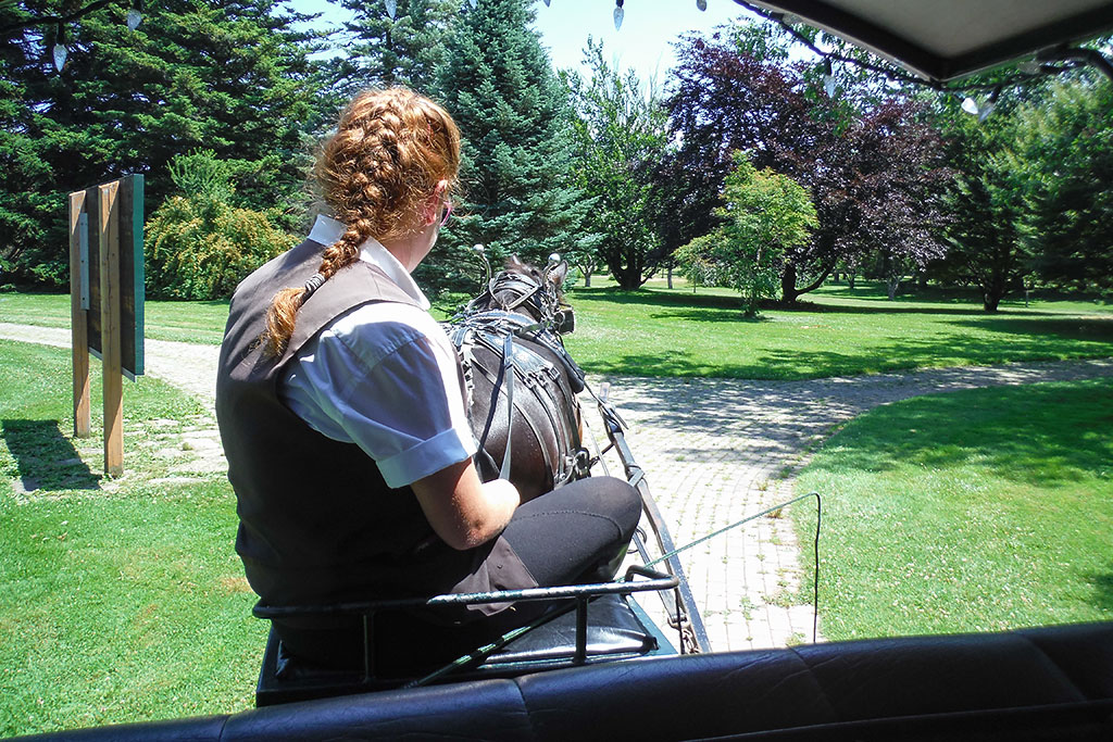 Horse and Carrage Ride at Niagara Parks' Botanical Gardens