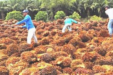 Lowongan Perusahaan Pabrik Minyak Kelapa Sawit PO BOX 1404 Pekanbaru Agustus 2019