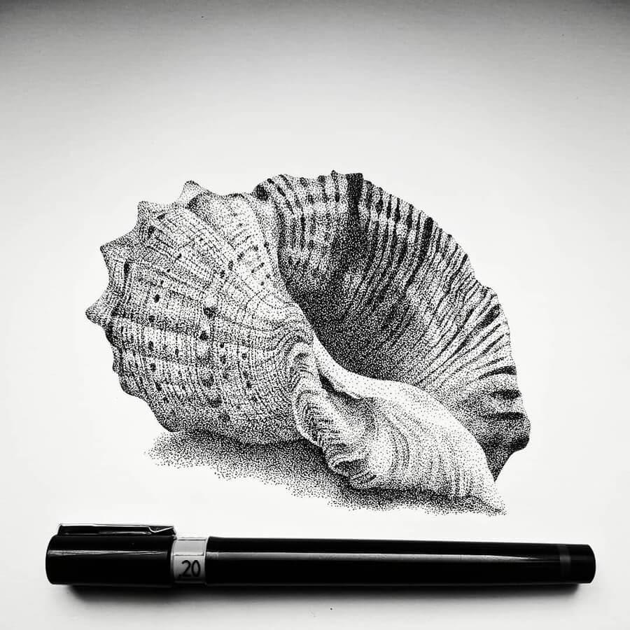 06-Seashell-Carole-Levy-www-designstack-co
