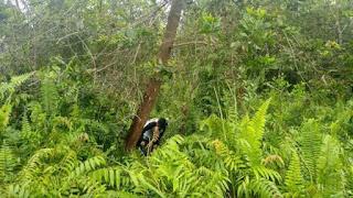 Tipe Hutan Berdasarkan Ketinggian Tempat