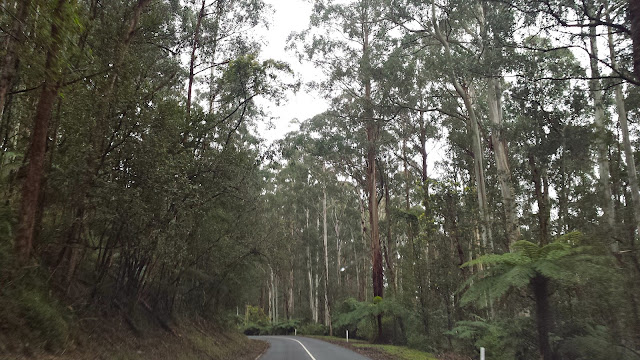 Mt Donna Buang Snow